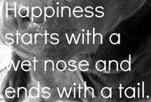 quotes we ♥ / DF favorite quotes