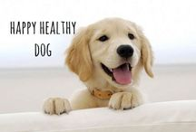 happy healthy dog / tips for a happy, healthy lifestyle for you & your pet & pics of happy dogs :) #happy #healthy #dog #happyhealthydogs #healthyliving #dogs