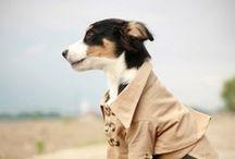 puppy swag / chic & stylish pups #dogs #fashion #dogfashion #style #pets