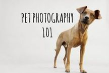pet photography 101 / photography tips for the artist & dog lover in us all #photography #dogs #dogphotography #petphotography #animalphotography #tips #howto