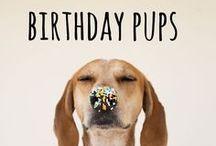 birthday pups / celebrating dogs birthdays #birthdaydogs #birthday #birthdays #celebrate #dogs