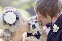 the flower dog / dogs + weddings = <3 #dogs #weddings #flowerdog #dogweddings #pups