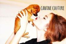 canine couture / when fashion & dogs collide... #fashion #dogs #models #couture