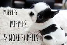 puppies, puppies & more puppies / can you handle these puppies?? #puppies #pups #dogs #cute #cuteoverload