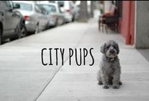 city living / little pups in the big city #city #citypups #citydogs #nyc