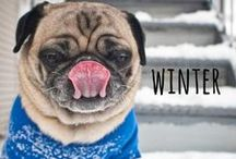 snow dogs / snowy dogs, winter dogs, holiday dogs, & sweaters! #winter #snow #snowdogs #dogs #holiday