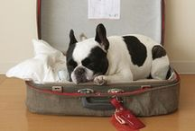 beds to dream on / comfy, snuggly dog beds