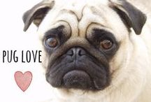 breed love ♥ pug