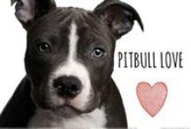 breed love ♥ pitbull / #pitbulls #pitties #pibbles