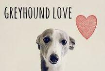 breed love ♥ greyhound / #greyhound
