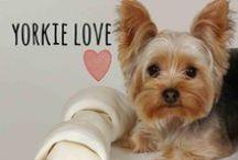 breed love ♥ yorkie / #yorkie