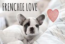 breed love ♥ frenchie / #frenchie #frenchbulldog