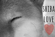 breed love ♥ shiba inu / #shiba #shibainu