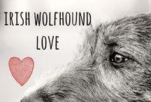 breed love ♥ irish wolfhound / #irishwolfhound