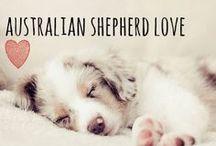breed love ♥ australian shepherd / #australianshepherd #aussie