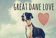 breed love ♥ great dane / #greatdane