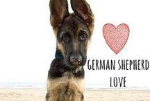 breed love ♥ german shepherd / #germanshepherd