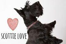 breed love ♥ scottie / #scottie