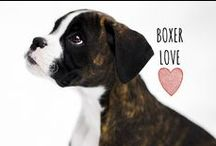 breed love ♥ boxer / #boxer