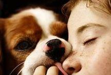 breed love ♥ cavalier king charles / #cav #cavy #cavalierkingcharles