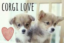 breed love ♥ corgi / #corgi
