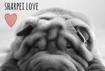 breed love ♥ sharpei / #sharpei