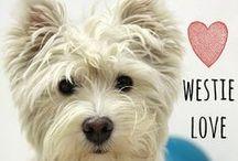 breed love ♥ westie / #westie