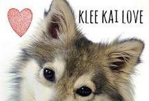 breed love ♥ klee kai / #kleekai