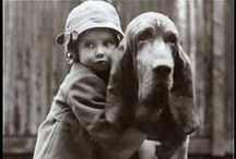 breed love ♥ bloodhound / #bloodhound