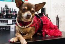 Dog Fashion Spa Products ♥