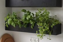 Plant decor / Plant decor ideas for indoor and outdoor
