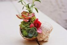 Ideas para mi jardín