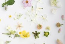 Bloom / by Studio Lipp