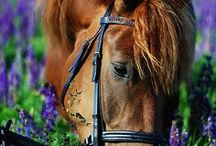 EQUESTRIAN / Horses lend us the wings we lack / by Sasha Soderlund (: