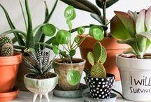 Groen in huis / Green | plants | groen | planten