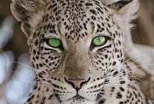 Wildlife / Walking the wild side with all the beautiful animals http://www.petsweekly.com/index.php/en/on-the-wild-side