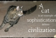 Cats / All About Cats http://www.petsweekly.com/index.php/en/joomla-license