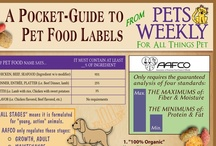 Awesome Animal Infographics / Animal and pet infographics worth checking out