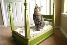 DIY Pet Stuff / Great do it yourself pet projects that revolve around pets!