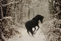 Horses / A look at beautiful equine around the world.
