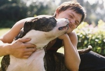 Celebrities & Pets / A look at celebrities and how they love their four-legged friends