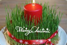Luciaweizen / Weihnachtsfrucht / Ein alter Weihnachtsbrauch zieht in unsere Familie ein. Ein Stückchen Weizenfeld und Sommerfeeling im Winter. Als Zeichen dafür, dass nach dem langen Winter der Frühling wieder kommt. #Weihnachten #Lucia #Tradition #Bräuche