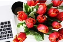 Flower, blossom, floret /