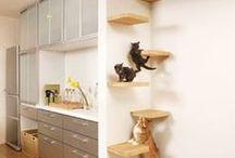 """Idee per gli """"stopoli"""" dicasi anche gatti pelosi :)"""