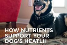 Nutrients for a Healthy Body / We're encouraging dog owners everywhere to try Purina ONE for 28 days. Because Purina ONE dry dog food is highly digestible, you should be seeing a difference in your dog's stools after two weeks. Start your 28-Day Challenge today! #ONEdifference  / by Purina One Dog