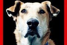 Greek riot dog, Loukanikos