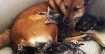 cats & dogs / Please don't breed or buy while shelter or stray animals die... Love them for what they are