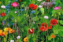 Bloemen decoratie / Décoration fleurs / Bloemen / Fleurs / Potten / Vases