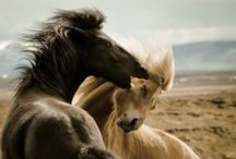 The Freedom of Horses