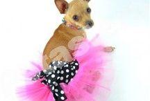 Τα ρουχαλάκια μας! Dog fashion! / Η μεγαλύτερη ποικιλία σε ρουχα για σκύλους! Περιηγηθείτε σε αμέτρητα σχεδιάκια και βρείτε αυτό που θα κάνει το σκυλάκι σας το πιο μοδάτο!